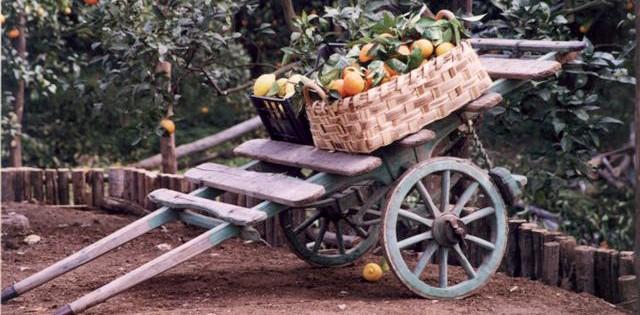 Baronello agrumi di sicilia for Acquistare piante di agrumi